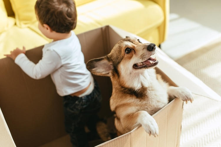 House Removals with Your Pet Dog Before Sydney Dog Lovers Show 2021